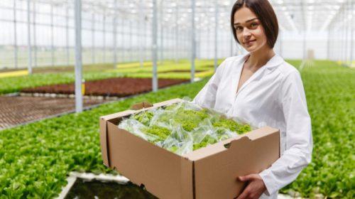 Robotizace v českém obchodě se více dotkne výrobců potravin než obchodníků